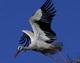 приметы птицы