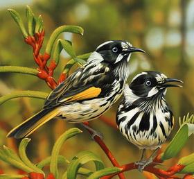 Сонник птицы
